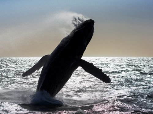 Mark Carwardine: on the Trail of the Whale