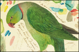The Parrot was painted by Edward Lear - Halesworth Arts Festival are hosting a major     exhibition of his work